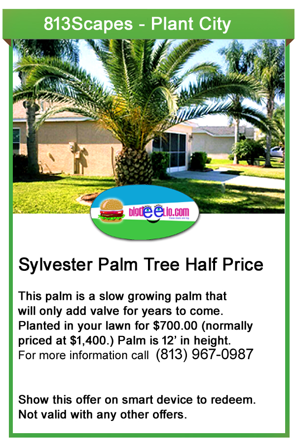 plant city landscaping offers
