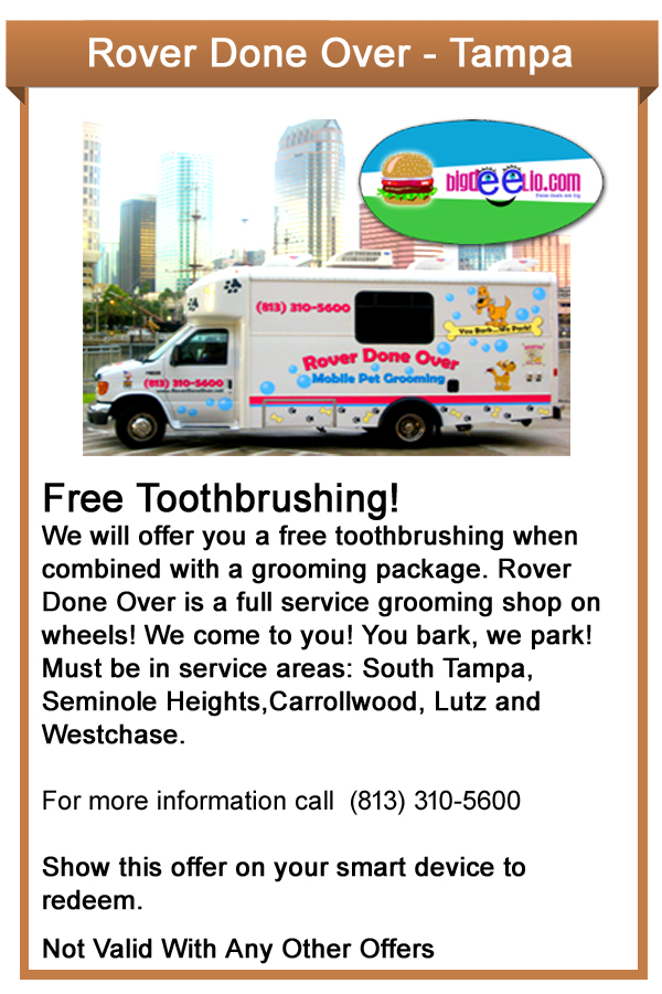 dog grooming tampa